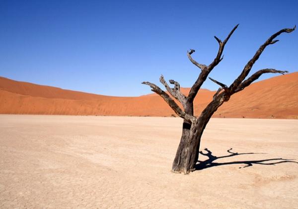 ilustrasi padang pasir © gaptect.com